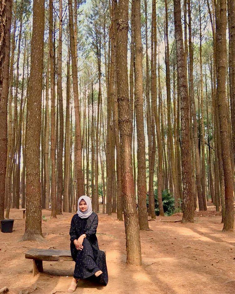 Hutan Pinus Mangunan, sumber ig ayuanda.k