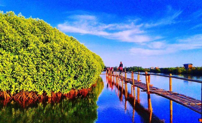 Hutan Mangrove Kulon Progo Jogja