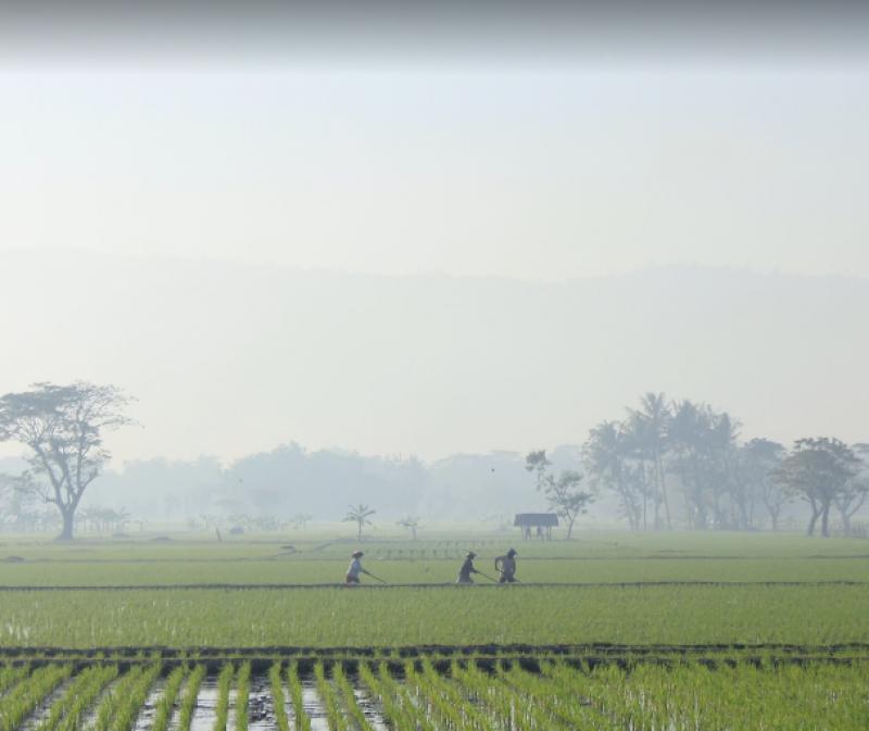 Pemandangan Sawah di Kebonagung, sumber : Atma Tour